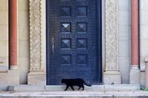 Black Cat Door